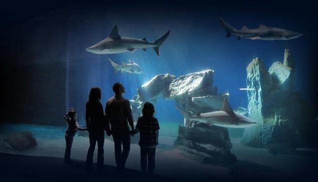 visitare l'acquario di Genova